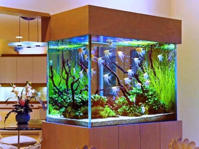 You are currently viewing Перевозка аквариума